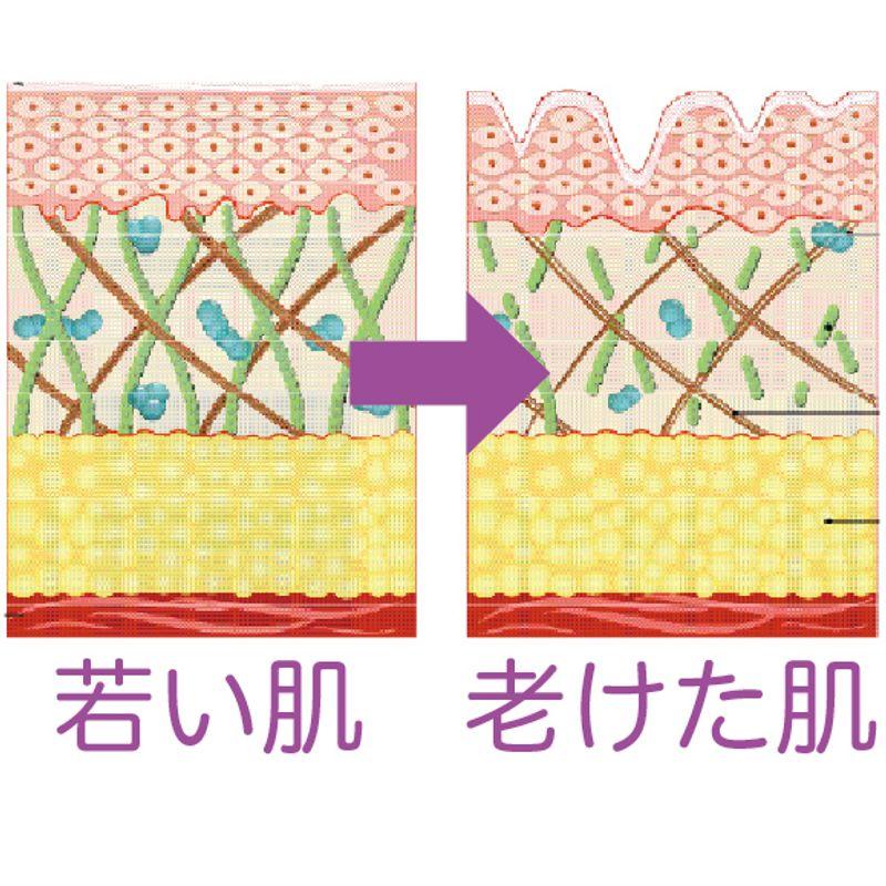【40歳からの落とすスキンケア】ターンオーバーの周期が長くなった大人肌には酵素洗顔・毛穴ケア・ピーリングが必要です